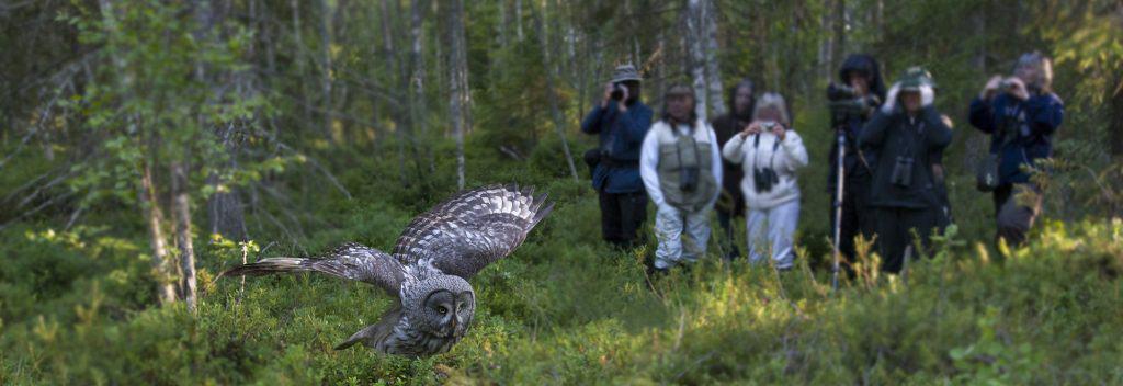 Birdwatching - Finnature