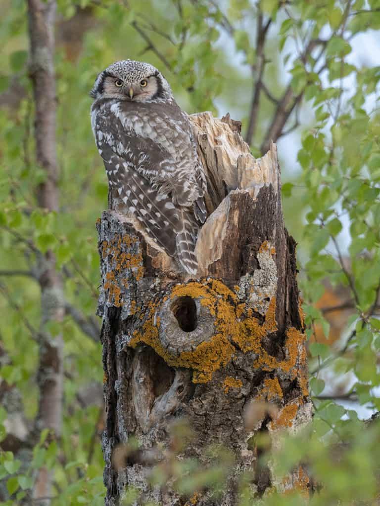 bird and mammal tours - birdwatching