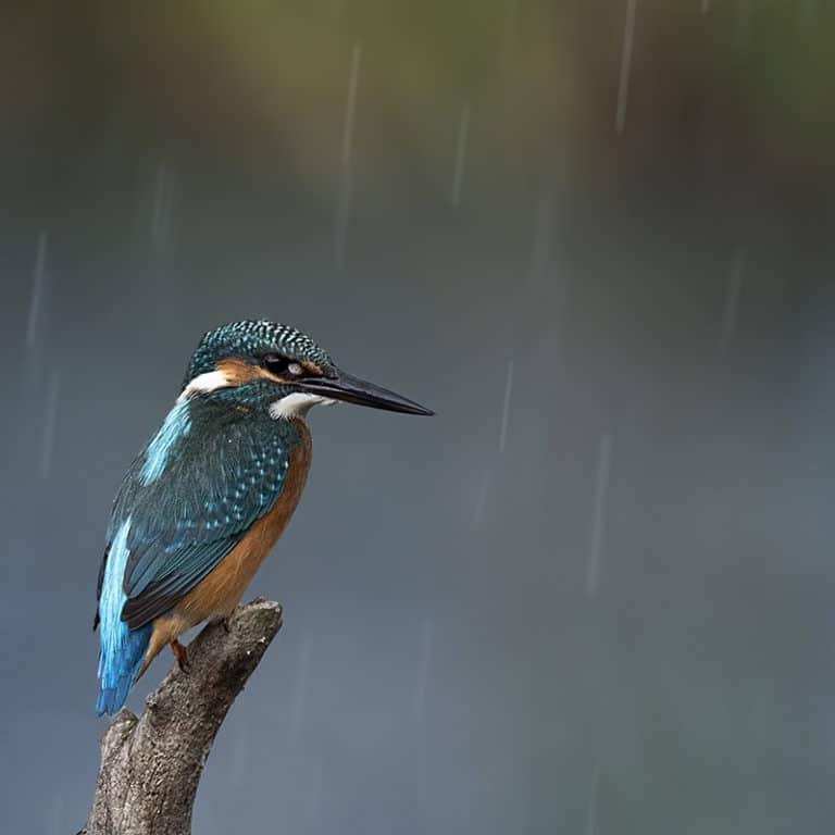 bird photography worldwide